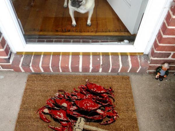 Crab Doormat Red Steamed Maryland Blue Crabs Damn Good